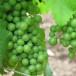 Tappa obbligatoria per un sommelier: Bordeaux e Vinexpo