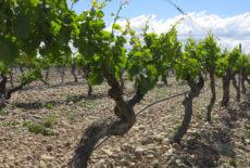 Tour virtuale nel Mediterraneo con il vini del CMB