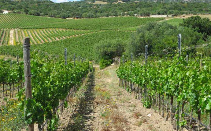Slow Wine 2019 – 13 ottobre a Montecatini Terme